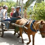 2 day tor Saigon - Mekong Delta - Saigon. Horse-drawn carriage